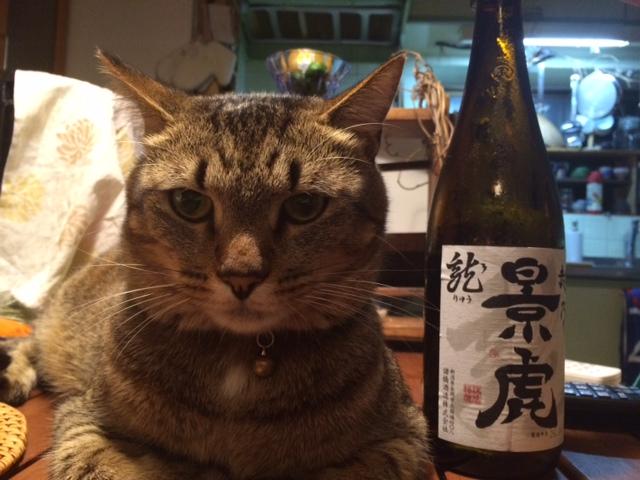 日本酒と猫